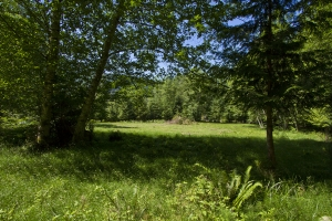 The cleared field as viewed between some trees