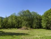 the wide open field